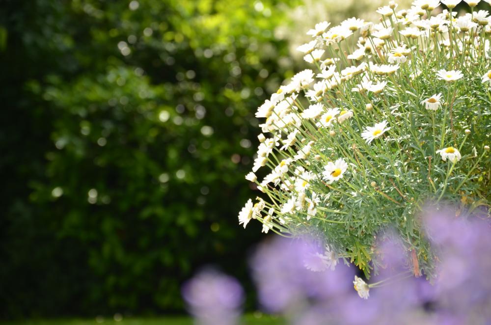Hingucker des Jahres sind diese Zierpflanzen mit Goldmedaillen für 2020