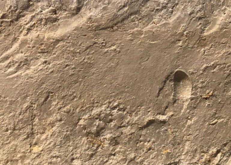 Wachenzeller Dolomit – Alleskönner unter den Kalksteinen